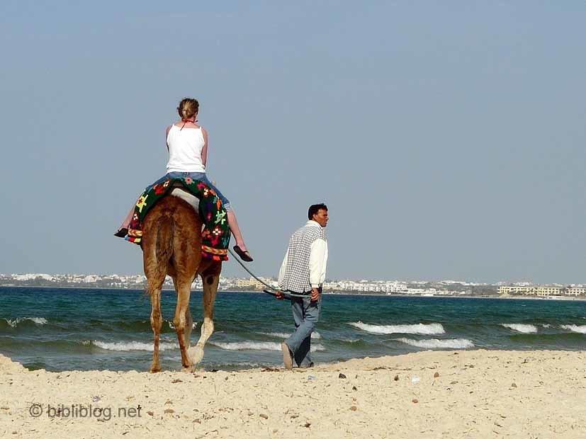 Tunisie-sousse-chameau