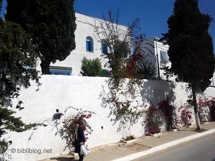 tunisie-sidi-bougainvillée