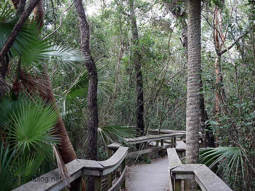 Hammock Everglades