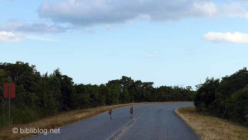 oiseaux sur route Everglades
