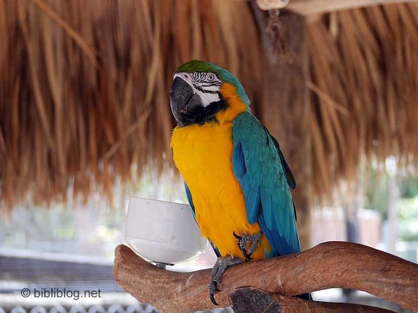 perroquets everglades