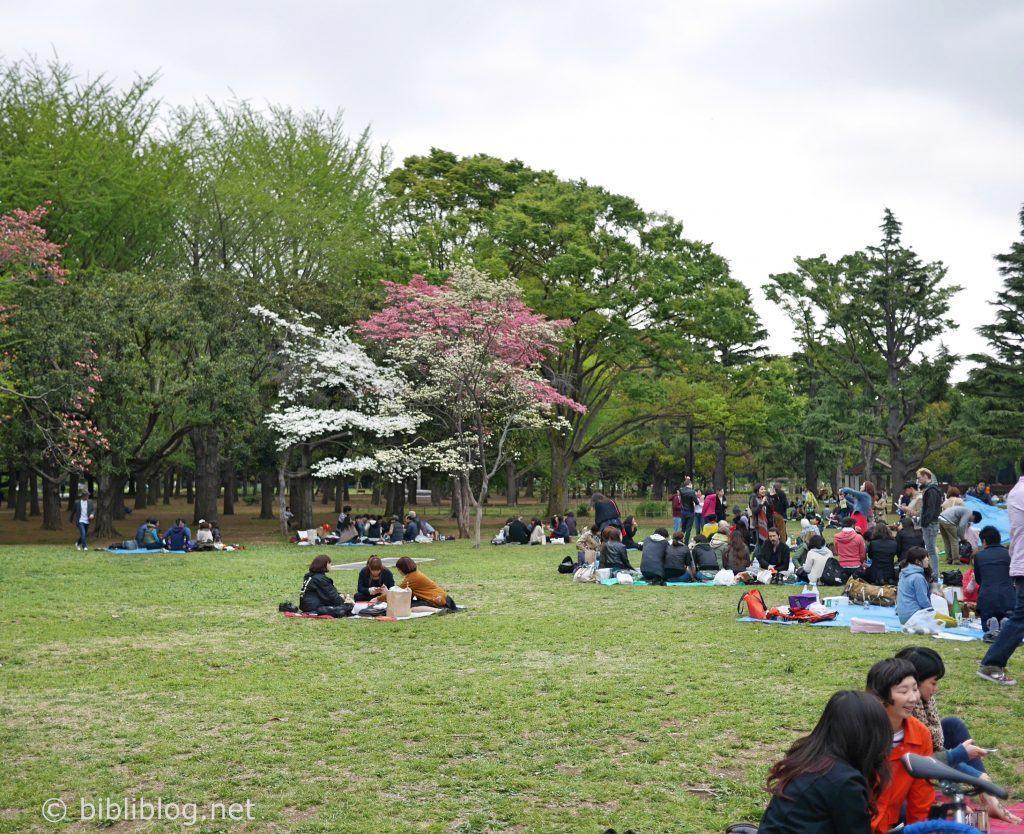 Parc Yoyogi Tokyo Hanami