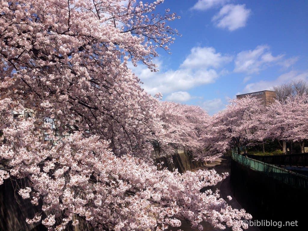 Sakura-bord-rivière-tokyo