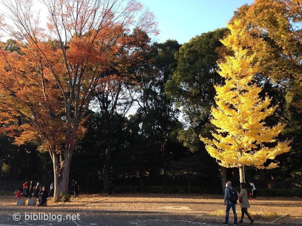 Parc Yoyogi en automne, Tokyo