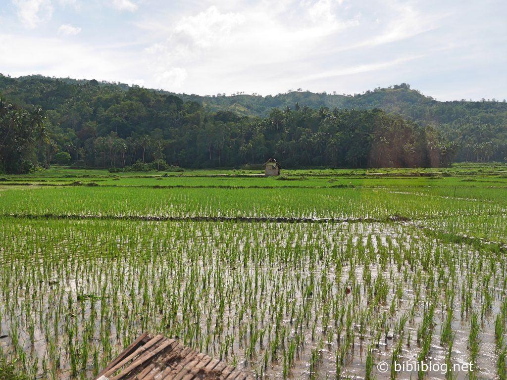 riziere-bohol-1