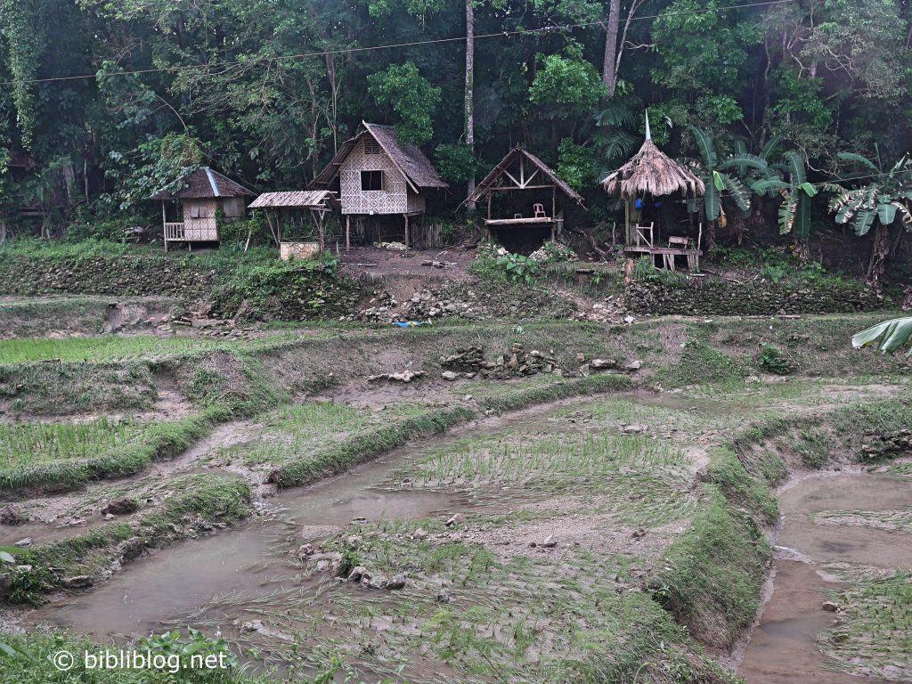 riziere-inondation
