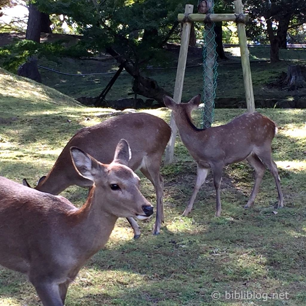 biches-japon-nara