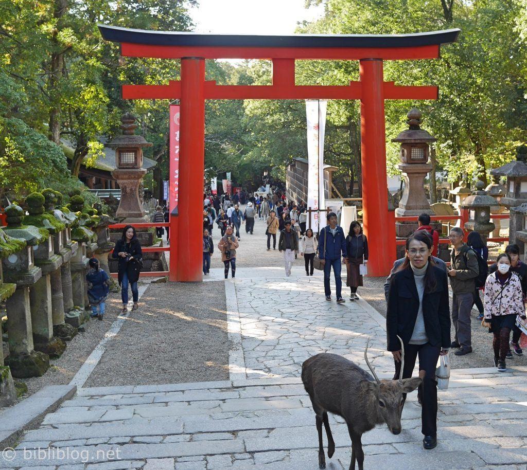 nara-torii-biche