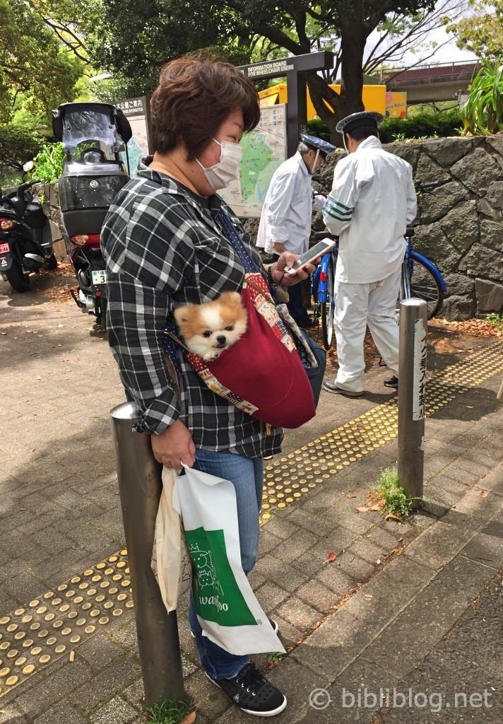 chien-portebébé-japon