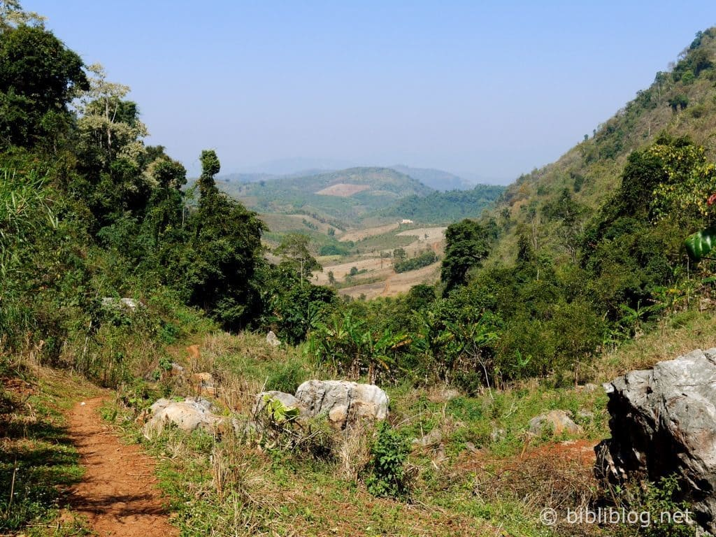 vue-jungle-laos