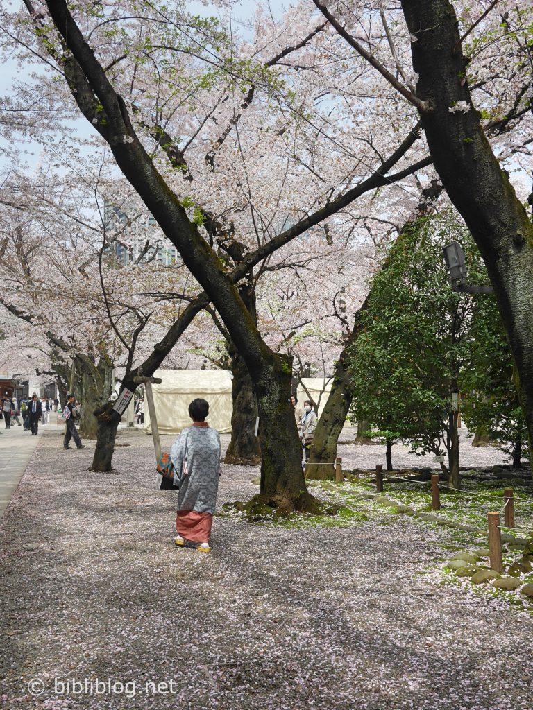cerisier-kimono-yakusuni