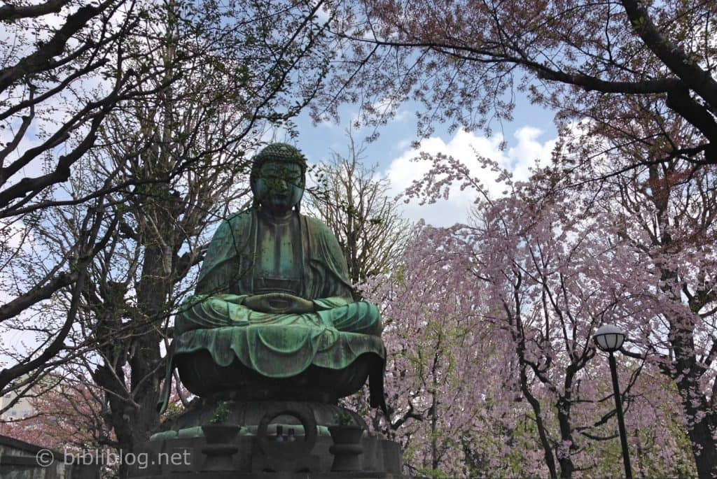 cerisiers-bouddha
