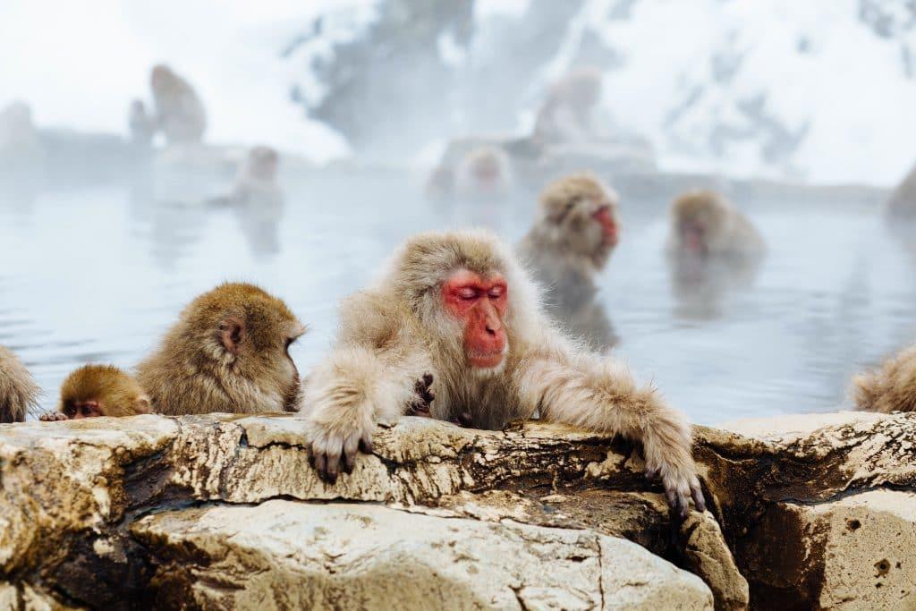 matthew-kane-onsen-singes