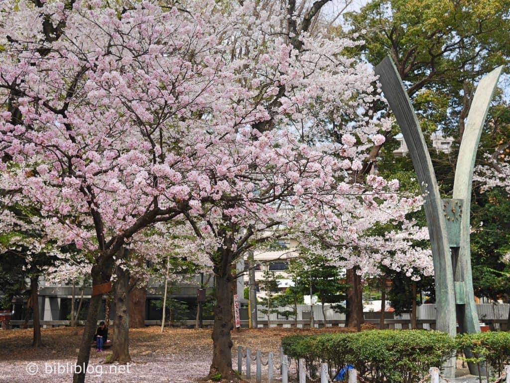 sakura-rose-yakusuni-1