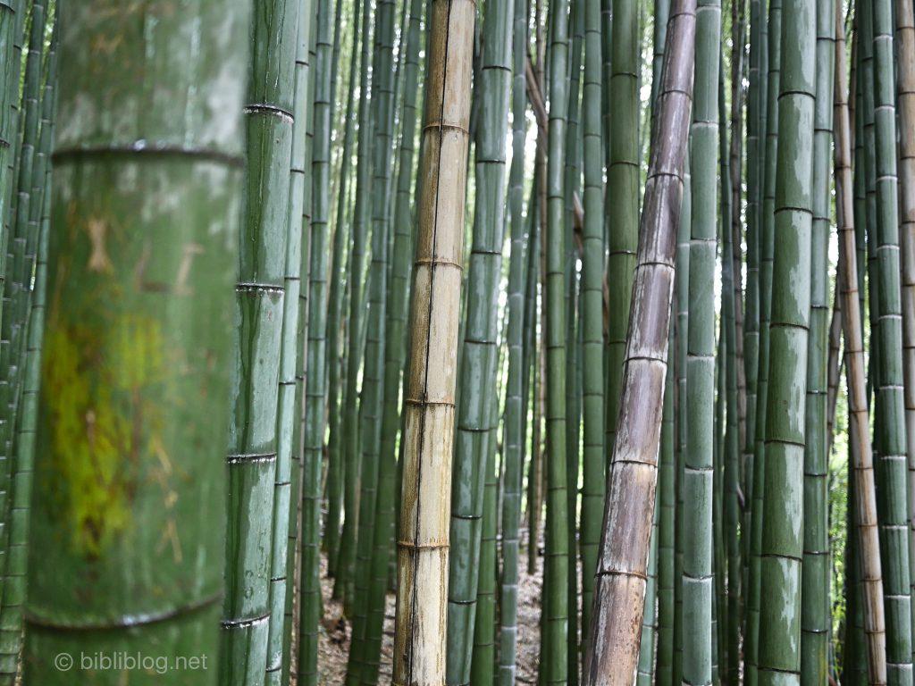 kyoto-bambous-1