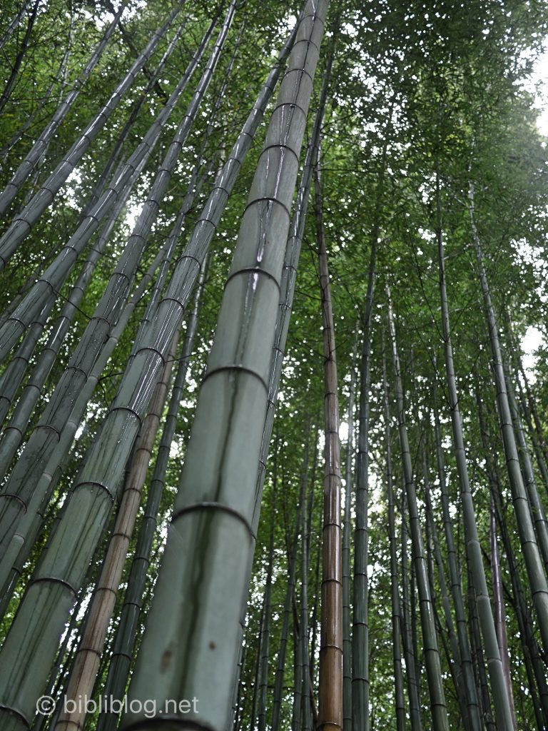 kyoto-bambous-2
