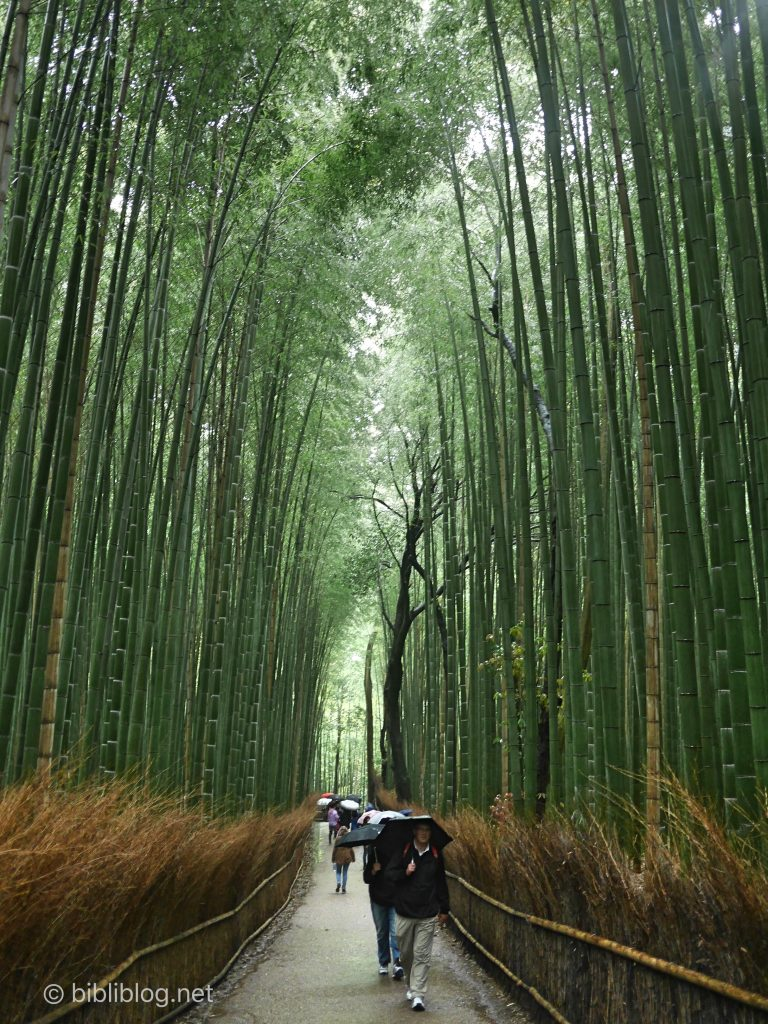kyoto-foret-bambous