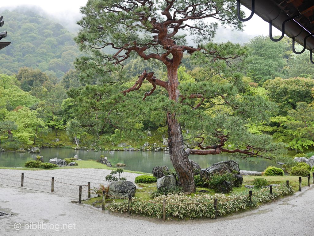 temple-kyoto-tenryuji-arbre