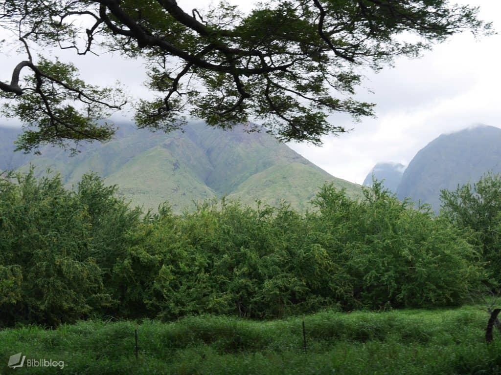 Maui-nature