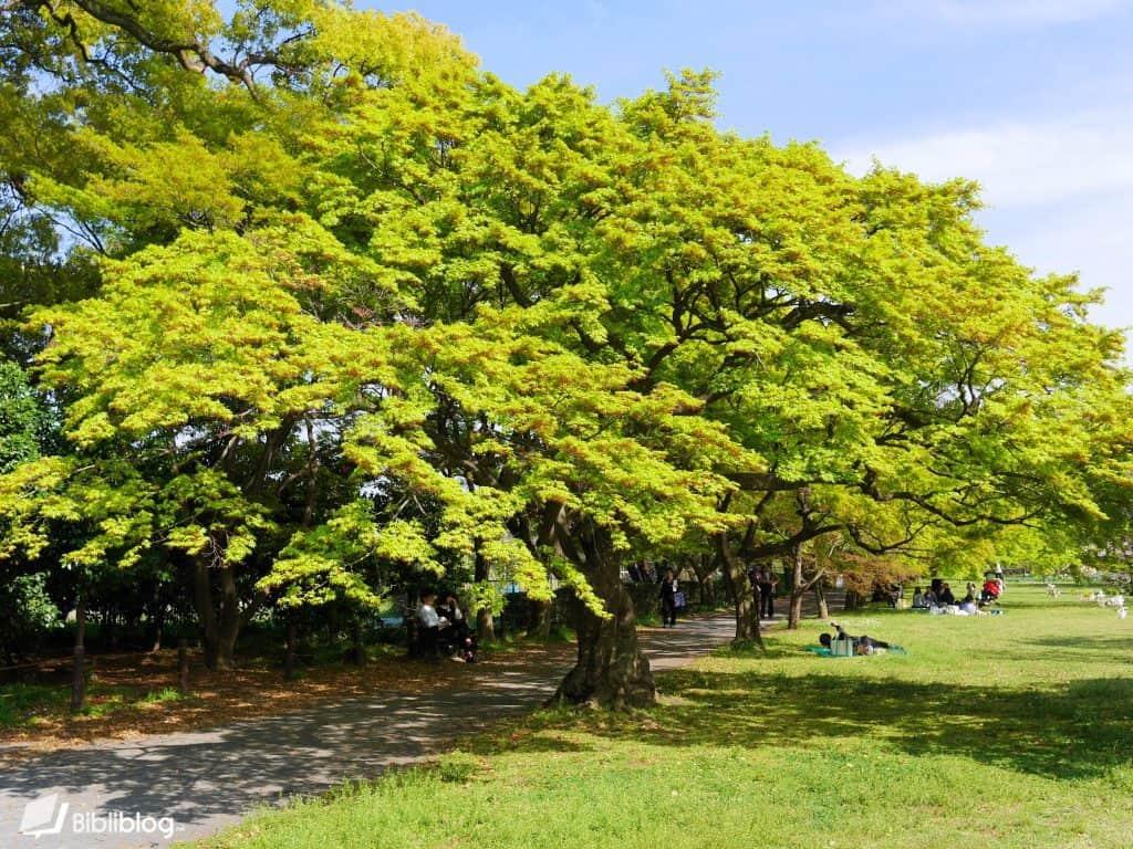 Tokyo-botanical-garden