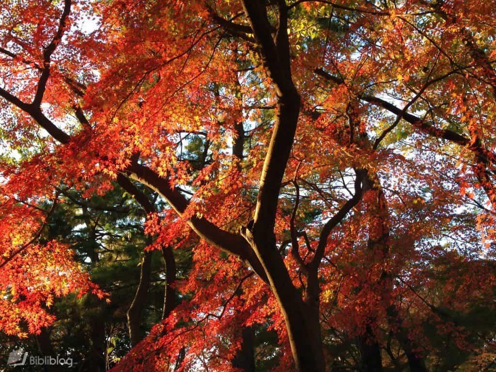 Parc de Yoyogi en automne, Tokyo