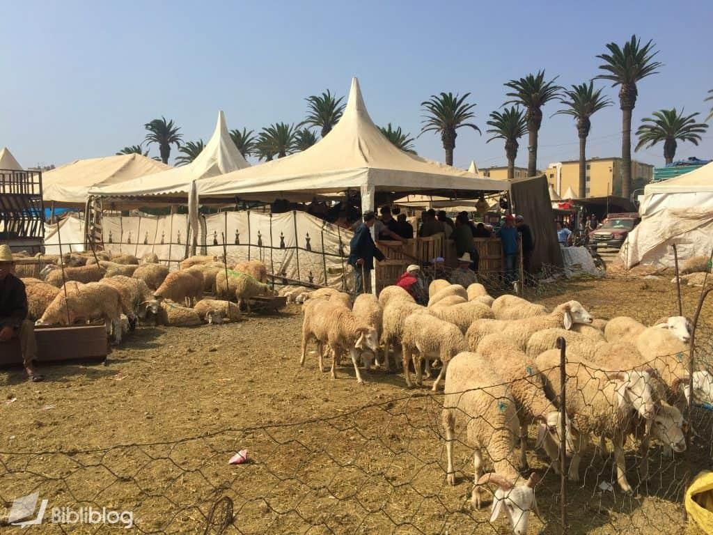Casablanca, marché aux moutons