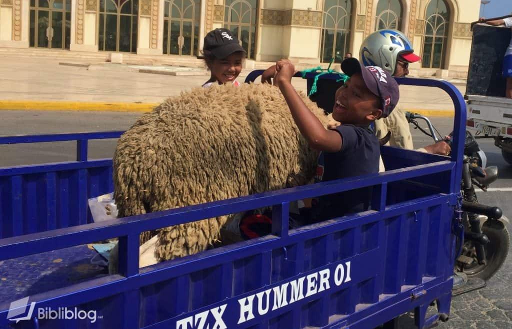 Mouton de l'Aïd, Casablanca