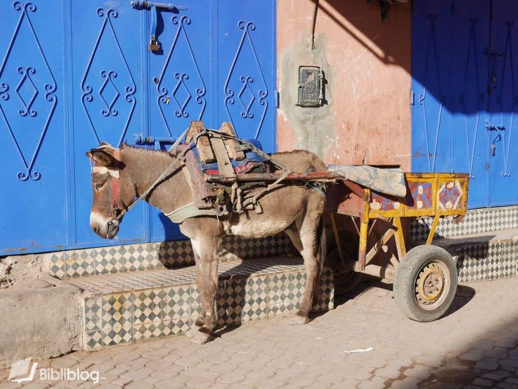 Âne dans la médina de Marrakech